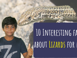10 Interesting, fun facts about Lizards for kids