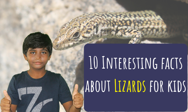 Interesting facts about lizards for kids