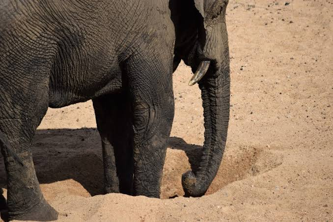 Elephant created water hole