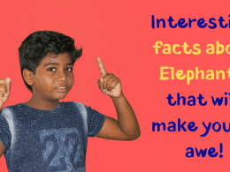 Interesting facts about Elephants that you probably didn't know