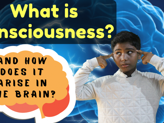 What-is-consciousness-and-how-does-it-arise-in-the-brain