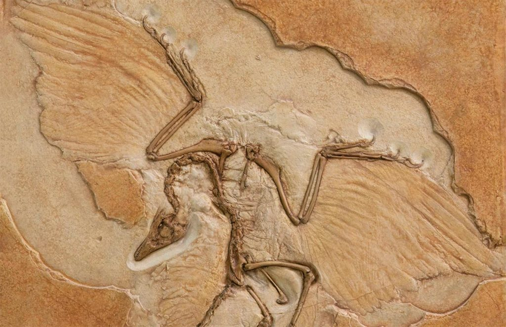 Archeoptryx