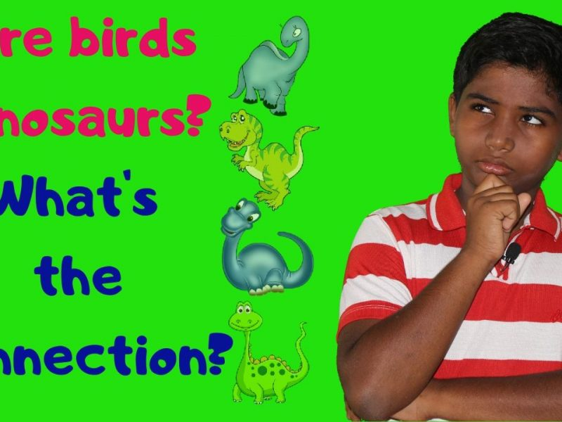 Are Birds Dinosaurs? What's the connection?
