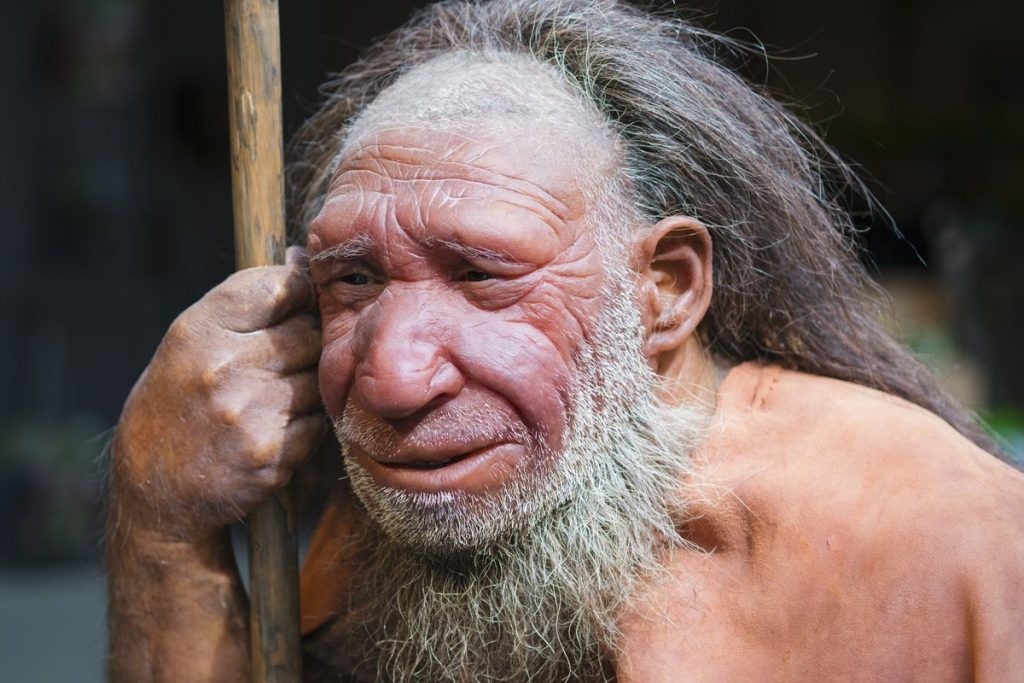 Neanderthals had a distinct face