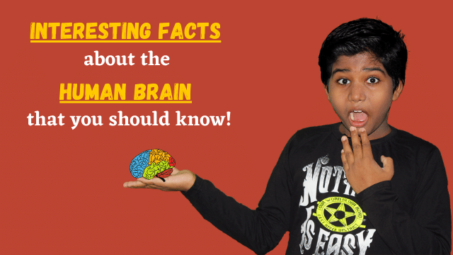 Interesting facts about the human brain that you should know!