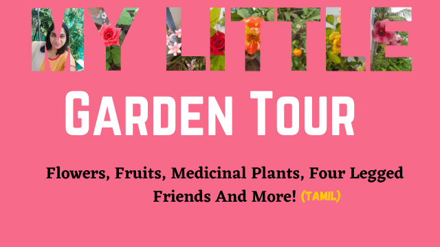 My Little Garden Tour - Flowers, Fruits, Medicinal Plants, Four Legged Friends And More (in Tamil)!