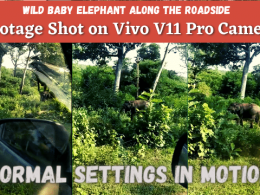 Wild Baby Elephant Along The Roadside - Footage Shot on Vivo V11 Pro Camera - Normal Settings In Motion