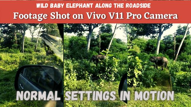 Wild Baby Elephant Along The Roadside