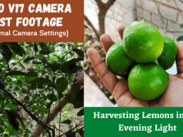 Harvesting Lemons in Dim Evening Light - Vivo V17 Camera Test Footage (Normal Camera Settings)