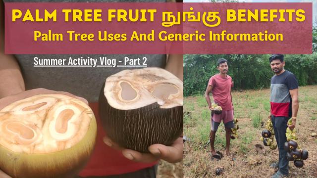 Palm-Tree-Fruit-Nungu-Benefits