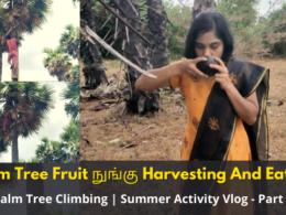 Palm Tree Fruit Nungu Harvesting And Eating | Palm Tree Climbing | Summer Activity Vlog - Part 1