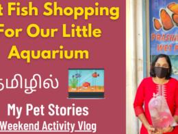 Pet Fish Shopping For Our Little Aquarium | My Pet Stories | Weekend Activity Vlog