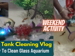 Fish Tank Cleaning Vlog | How To Clean Glass Aquarium | Useful Weekend Activity | Demo Tamil | ASMR