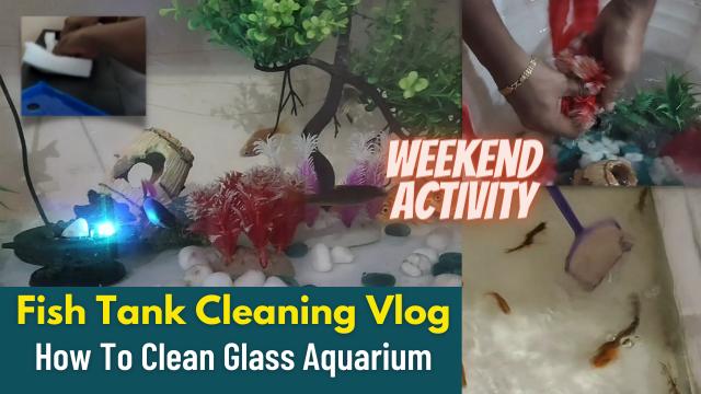 Fish-Tank-Cleaning-Vlog