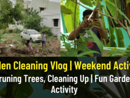 Garden Cleaning Vlog | Fun Yet Useful Weekend Activity | Pruning Trees, Cleaning Up | Fun Activity